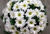 Корейская хризантема. Декоративный цветок