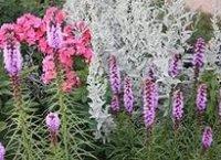 Полынью. Дикорастущий садовый цветок