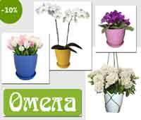 Пластикові горщики для квітів оптом