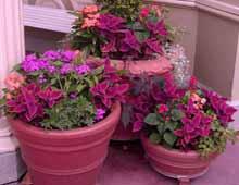 Комнатные цветы растения и уход за ними